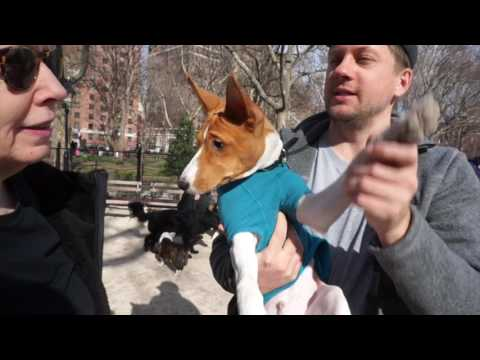 February 2017 New York City Basenji Meetup