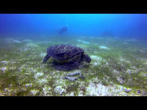 Diving the Philippines 2013/14: Cabilao, Boracay, Panglao in FullHD