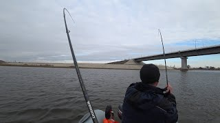 ЖОР ХИЩНИКА в Астрахани Судак и щука не дают уехать с рыбалки