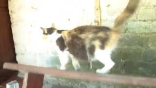 Кошка упала со скамейки | Приколы с кошками
