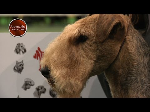 Around the Dog World - National Terrier and more 2017