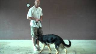 Owner Update - Training Session With Kc - 7 Month German Shepherd