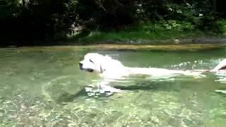 アンジュ~初めての川遊び! 必死です(笑)