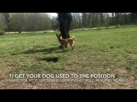 Teach Your Dog To Heel! | Dog Training Tutorial