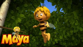 IN SEARCH OF THE LOST DUNG Maya the Bee Episode 41