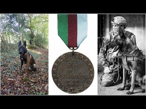 تقليد كلب بوليسي خدم مع القوات الخاصة الفرنسية في مالي ميدالية بريطانية للشجاعة …  - نشر قبل 2 ساعة