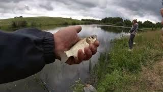 Ловля КАРАСЯ на пруду Стоило только прикормить и карась сошёл с ума ХАПУГА сделала рыбалку
