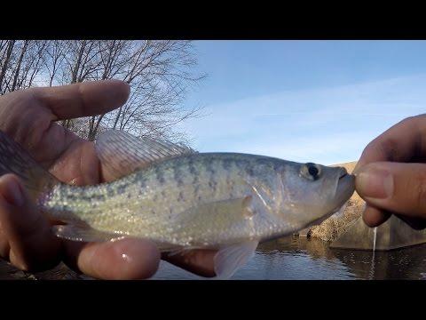 Winter Spillway Jigging For PANFISH (New Britain, PA)