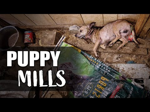 Puppy Mills: What They Are & How To Stop Them