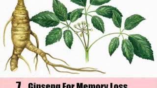 9 Herbal Remedies For Memory Loss