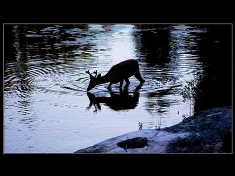 AS THE DEER PANTS FOR THE WATER