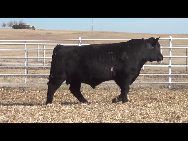 Express Ranches Lot 388