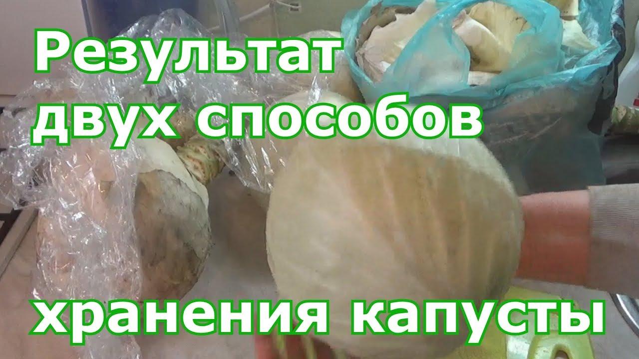 Результаты двух способов хранения капусты