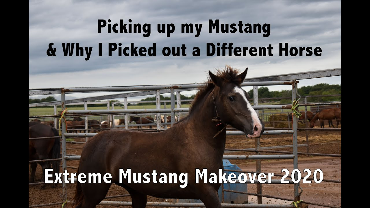 Picking Up My Mustang and why I Picked out a Different Horse | Extreme Mustang Makeover 2020 |  Ep 4