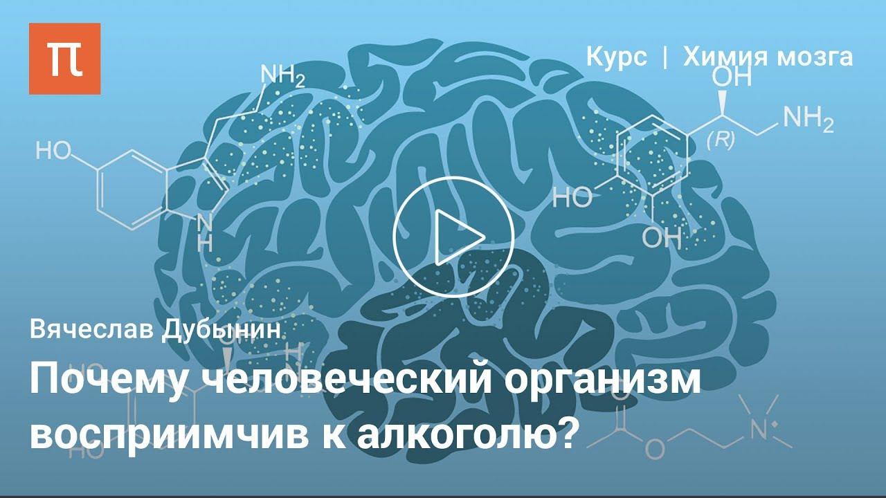 Мозг и алкоголь: Почему человеческий организм восприимчив к алкоголю?