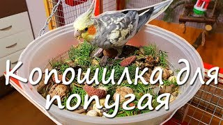 КОПОШИЛКА ДЛЯ ПОПУГАЯ. Как сделать сухую кормушку попугаю? | Рокки Life