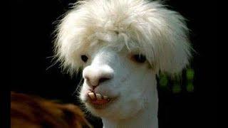 Best animals funny video हस हस के थक  जाओगे