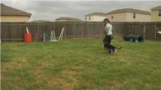Dog Leash Training : Dog Leash Training: Left Turn Exercise