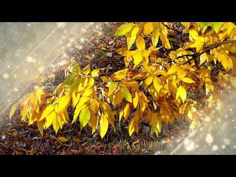 Яркие краски осени и чарующая музыка BEBU SILVETTI - Piano