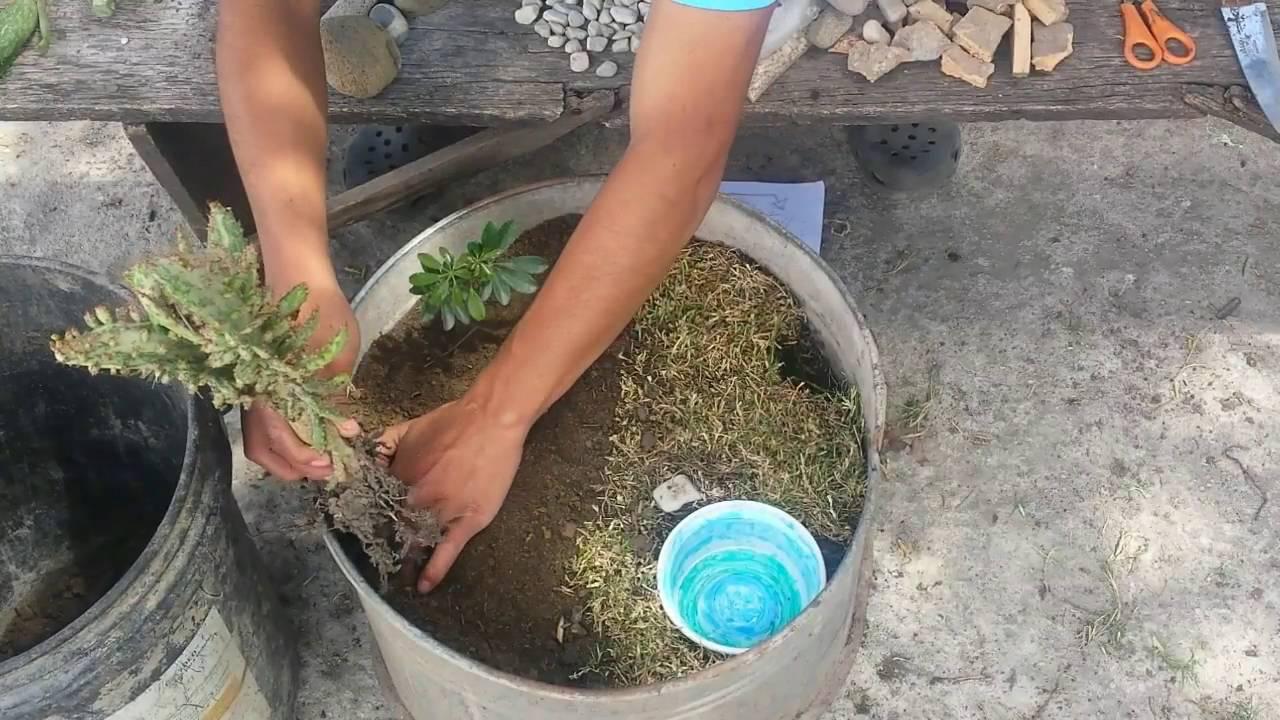 Como hacer un mini jardin facilmente youtube - Hacer un jardin ...