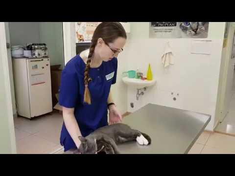 Один день из жизни ветеринарного врача.