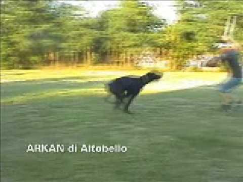 Arkan di Altobello