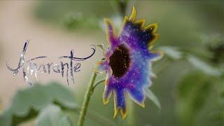 Amarante - Awakening (Official Music Video)