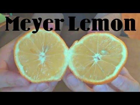 What Does Meyer Lemon Taste Like? - Weird Fruit Explorer - Ep. 31