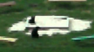 детская площадка,вместо детей собаки!!!!