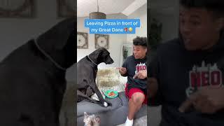 Dog Pranks🐶😂 #dog #viral #comedy #funny #animal #prank #greatdane #roblox