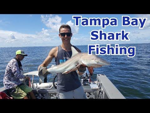 Tampa Bay Blacktip Shark Fishing - Florida