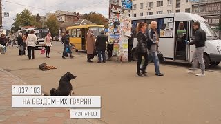 Скільки грошей житомиряни витрачають на безпритульних собак - Житомир.info