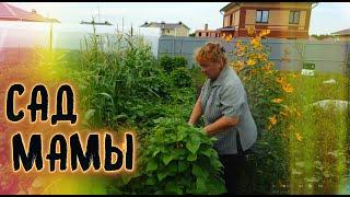 Обзор огорода моей мамы // Влог про жизнь в деревне // Грядки , сад , розы