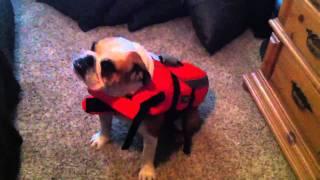 Butch The Bulldog Life Vest