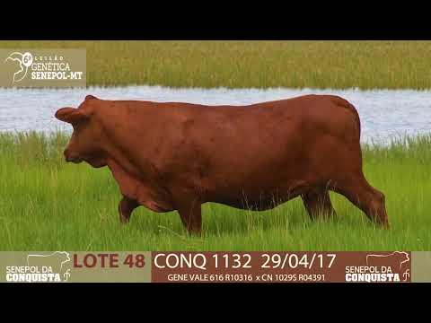 LOTE 48 CONQ 1132