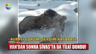 TİLKİDEN SONRA ATMACA DONDU !!!
