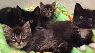 Rescue 4 Little Kittens Are Super Cute Found Them Forever Family