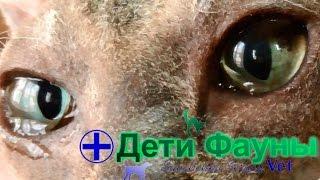 Слезятся глаза у собаки/кошки. Основные причины