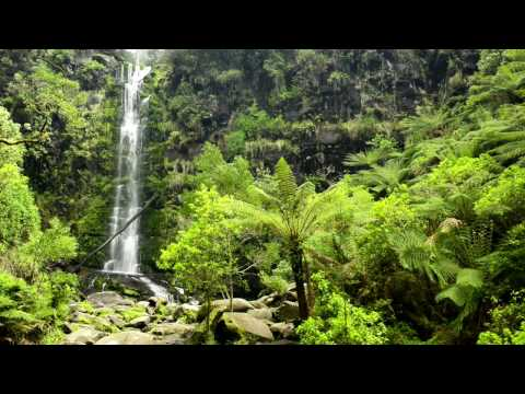 🎧 Waterfall & Rainforest Ambient Sound - Relaxing Forest, Ju