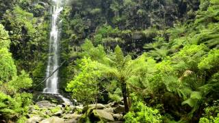 🎧 Waterfall & Rainforest Ambient Sound - Relaxing Forest, Jungle Nature Sounds For Relaxation