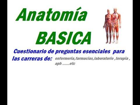 anatomía basica 1-planos anatomicos y regiones corporales - YouTube