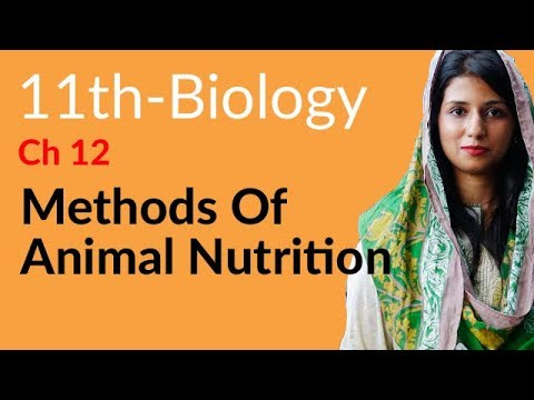 First Year Biology Methods of Animal Nutrition -Biology Chapter 12 Nutrition-FSC book 1