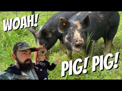 IDAHO PASTURE PIGS! HYPE & RUMORS!