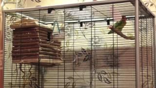 Когда ставить гнездовой домик попугаям