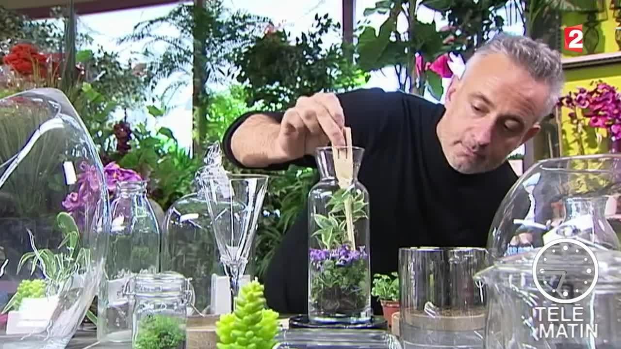Terrarium Fermé Plante Grasse des plantes en bocal