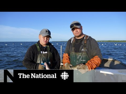 Manitobans At Odds Over Lake Winnipeg Walleye