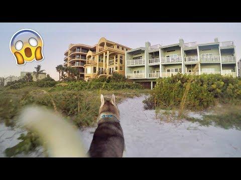 Gohan Arrives to The Beach House!!