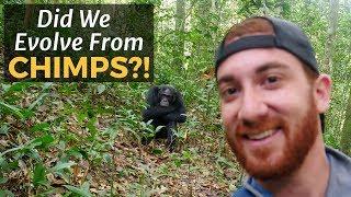 Did We Evolve From Chimps? UGANDA