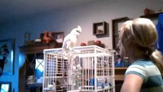 Sweetie The Goffins Cockatoo Meets Alyssa