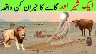 Allah ke wali ka Sher Aur Ek Gaye/Cow ka waqia | Syed Sher Ali shah Ghazi || Karamat | Mazar || Lion